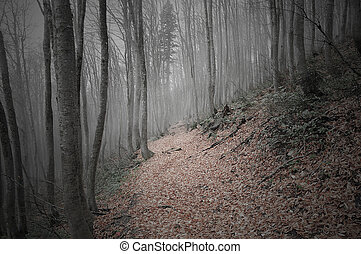 Dark mountain forest - Evening in a dark mountain forest