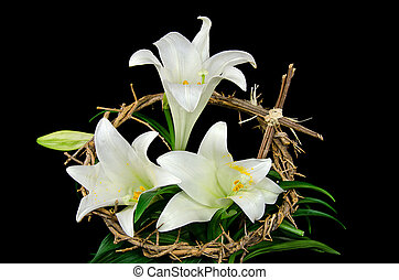 Easter lily with crown of thorns