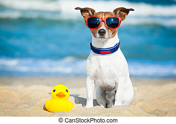 dog summer beach - dog sitting with plastic rubber duck at...