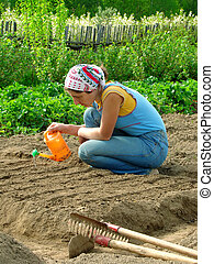 sowing - woman watering vegetable bed for sowing seeds...