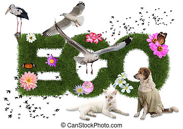 Eco 3d word with animal on white