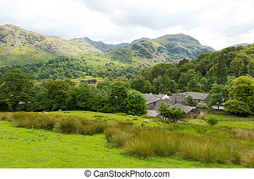 Lake District country scene uk - Country scene of sheep in a...