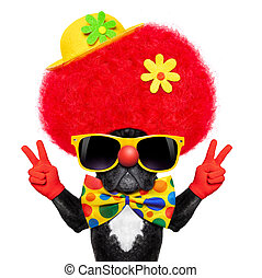 silly clown dog - silly dog wearing clown costume with peace...