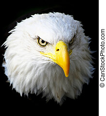 American eagle head on black background