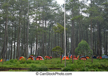 camp in the woods at Lembang Indonesia