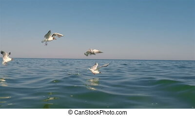 Seagulls flying and on water
