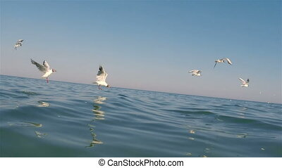 Seagulls   - Seagulls flying and on water