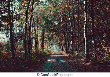 Forest road. Landscape.  avenue of trees in the park .  misty au