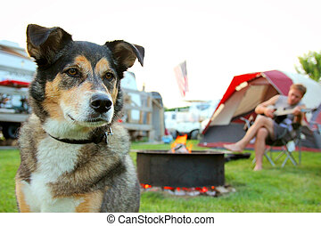 Dog at Campground in Front of Man Playing Guitar