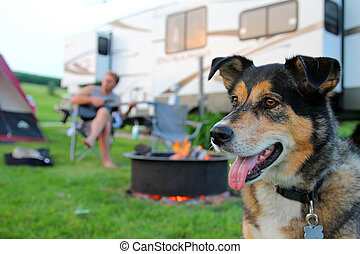 Dog at Campground in Front of Man Playing Guitar - A German...