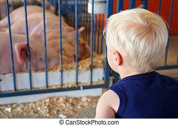 Young Child Looking at Pigs at County Fair - A young child...