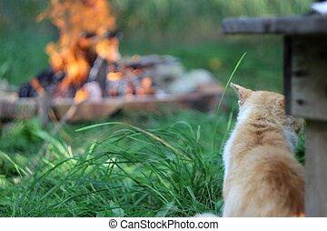 Cat by the campfire - Ginger cat by the campfire