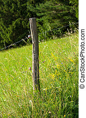 Electric Fence with Blooming Pasture