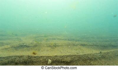 Fish   - Underwater shooting of fish