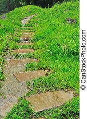 Pathway in a green garden