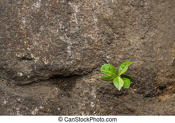 Small green plant growing between stones. - Close up small...