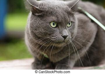 el suyo, enojado, territorio, Defender, gato