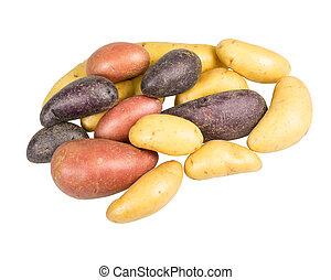 Fingerling potatoes of several colors isolated - Fingerling...