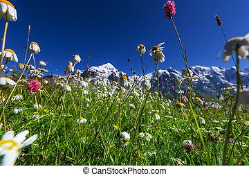 Mountain meadow - mountains meadow