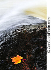 Leaf floating in river - White water river with floating...