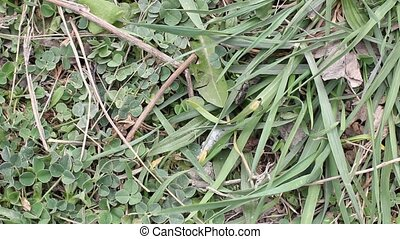 beetle crawling in the grass