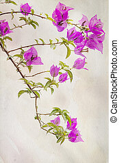 Watercolored Bougainvilleas - Exotic pink Bougainvilleas...
