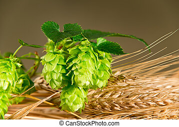 Hop Cones With Barley - detail of hop cones and barley with...