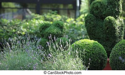 topiary of the garden - topiary in the Regular garden Loop...