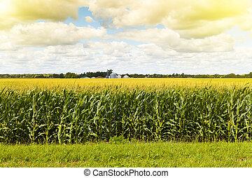 norteamericano, tierras labrantío, con, azul,...