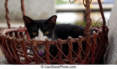 Little Cat in Wicker Basket. Cute Kitten. - Little Cat in...