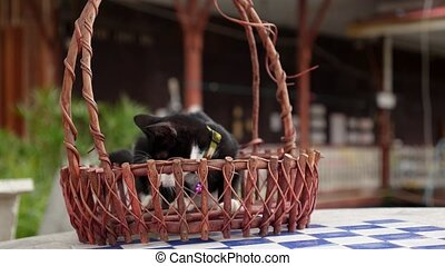 Cute Little Kitten Sitting in Basket. HD, 1920x1080.