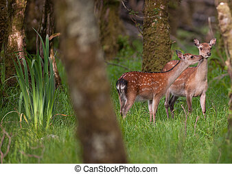 two young deer in the forest