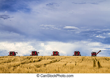 Large Red Combines Agriculture Equipment - Row of red modern...