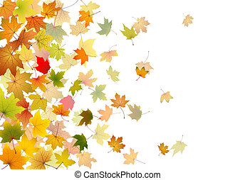 Maple leaves falling - Maple autumn falling leaves, vector...