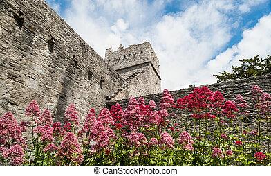 Muckross Abbey flowers in Killarney, Ireland
