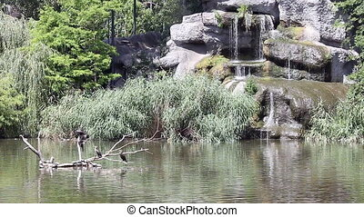 lake with cormorant birds and waterfall