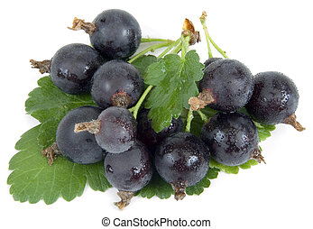 Jostaberry - Black Velvet Gooseberry - New hybrid between...