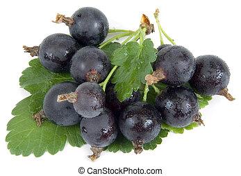 Jostaberry - Black Velvet Gooseberry - New hybrid between...