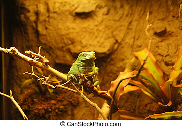 Chillen like a frog - A green frog chilling on a branch.