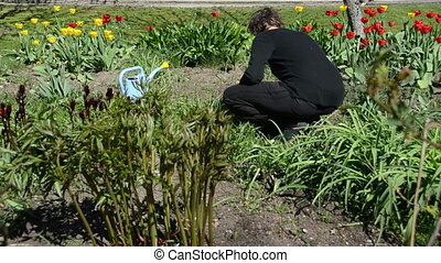 woman spring flower bed - back of woman look after tulip...