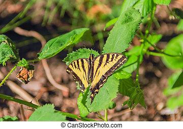 Butterfly Basking In Sunlight