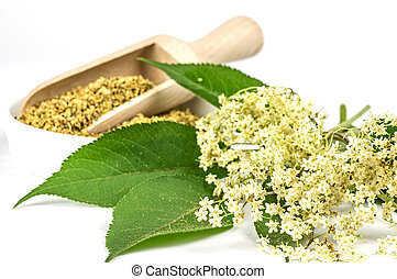 Dried and fresh elder blossoms
