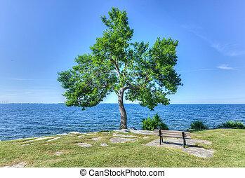 Tree and Bench in MacDonald Park, Kingston, Canada - Tree...