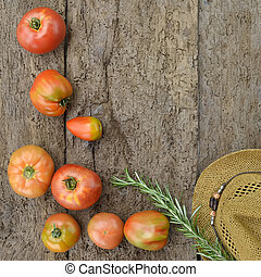 odling, organisk, tomaten