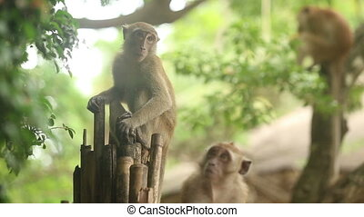 monkey sitting on a branch - monkey sitting on a bamboo...