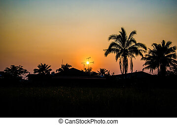 Silhouetted of coconut tree at sunset