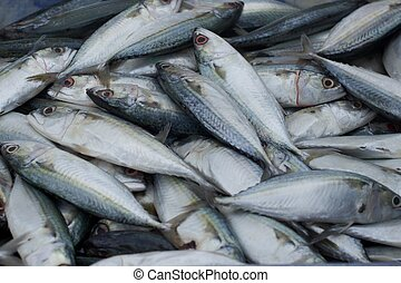 Mackerel fish selling in the market in thailand