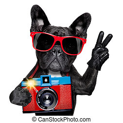 dog photographer - cool tourist photographer dog taking a...