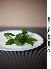 plate with the green leaves as symbol of vegetarianism or...