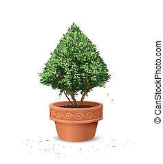 Pots pine tree, vector illustration